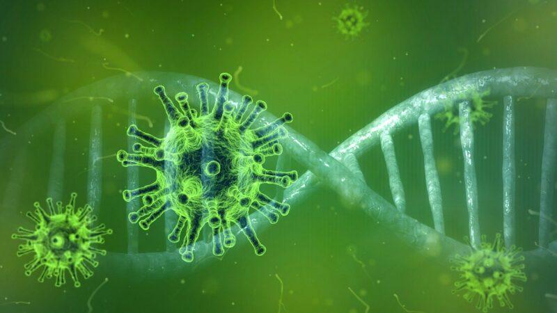 Ricerca Unibo: i sei ceppi del coronavirus SARS-CoV-2 (che continua a mutare poco)
