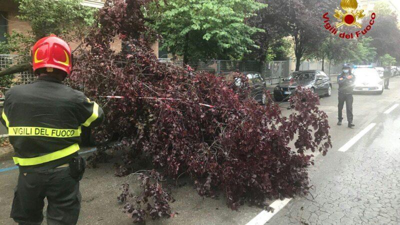 Un albero cade sulla strada a causa del maltempo: in via Schiassi intervengono i Vigili del Fuoco