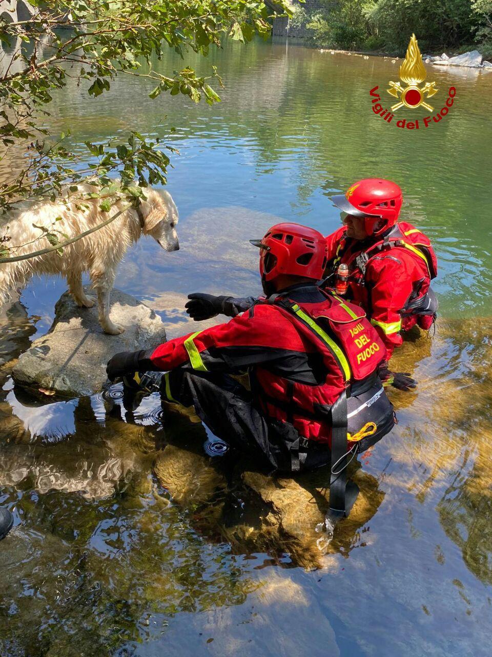 I Vigili del Fuoco salvano un cane rimasto intrappolato nel mezzo del fiume Reno