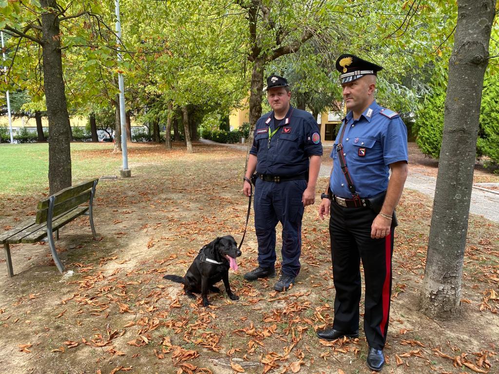 Esche mortali in un parco a Pianoro: area bonificata grazie a Alma dell'unità cinofila dei Carabinieri