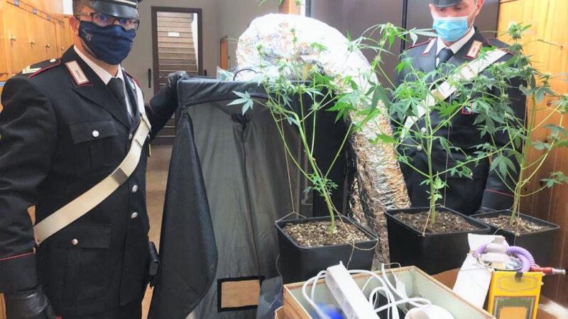Producevano e spacciavano droga: arrestata una coppia di spacciatori a Medicina