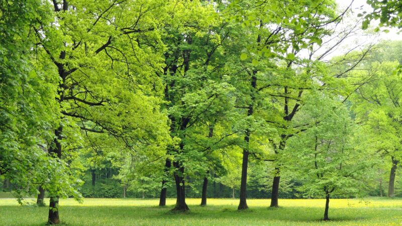Bologna, il sindaco Merola chiude cinque parchi cittadini dalle 22 alle 6: si parte da lunedì 26 ottobre
